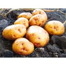 Картофель, раннеспелые сорта 65—70 дней, Левада в сетке 3 кг