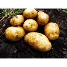 Картофель, среднеспелые сорта 80—85 дней, Савана в сетке 3 кг